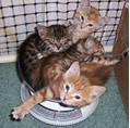 Kittens in a scale