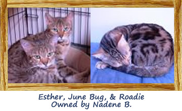 Esther, June Bug, and Roadie